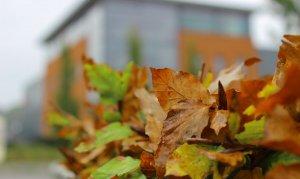Herfst- en wintercheck