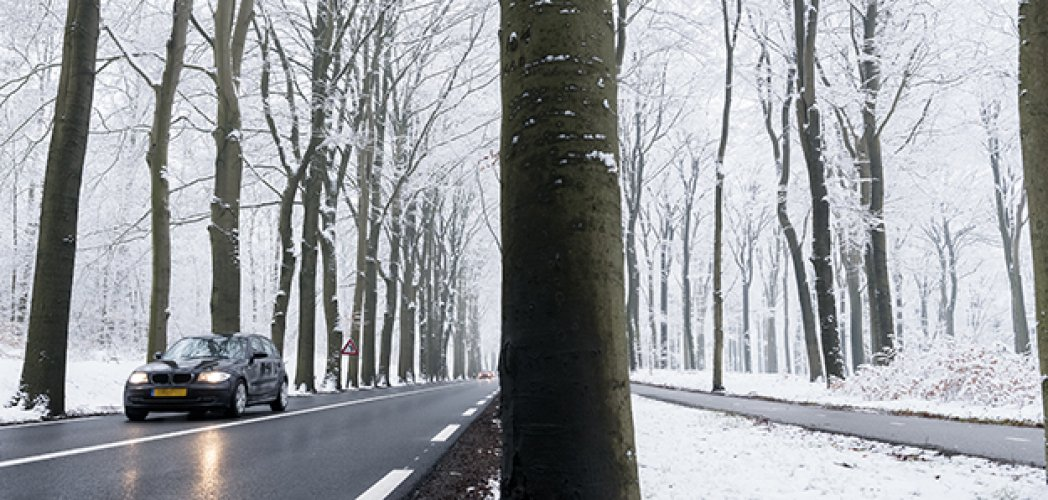 car on tarmac road and reflection in wet surface through snow forest in dutch winter near austerlitz and utrecht in holland